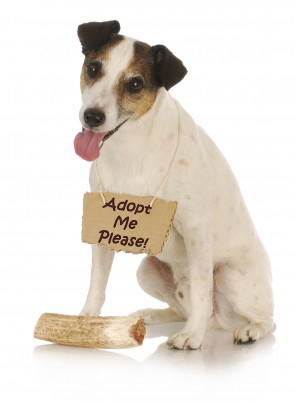 Tips for Adopting a Dog