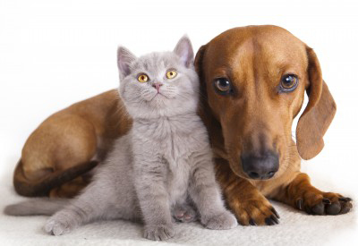 Avoid Giving Up Your Pet