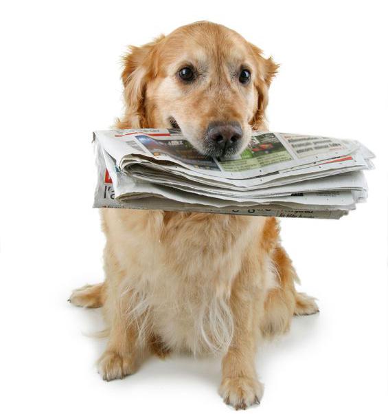 PET SAVERS Newsletters