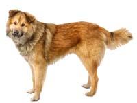 senior dog2